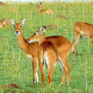 3 days safari uganda