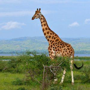 uganda attractions