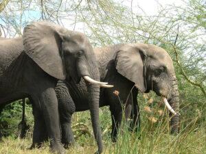 Lake Malawi safari tours