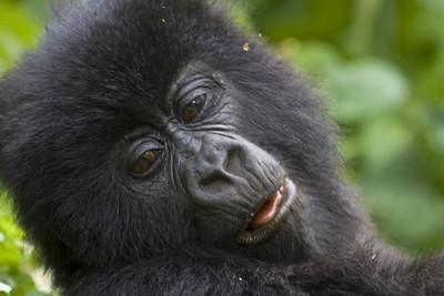 budget gorilla tours rwanda