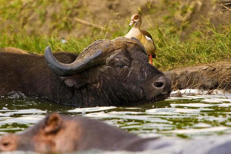 animals of Uganda