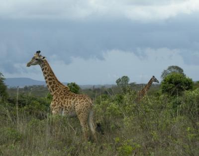 arusha safari tanzania