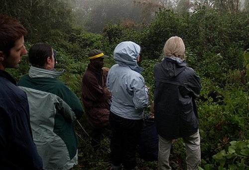 gorilla trekking group