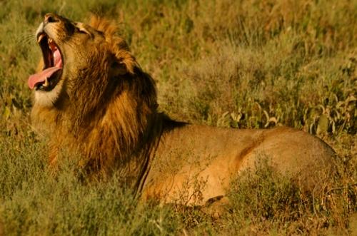 tanzania safari africa